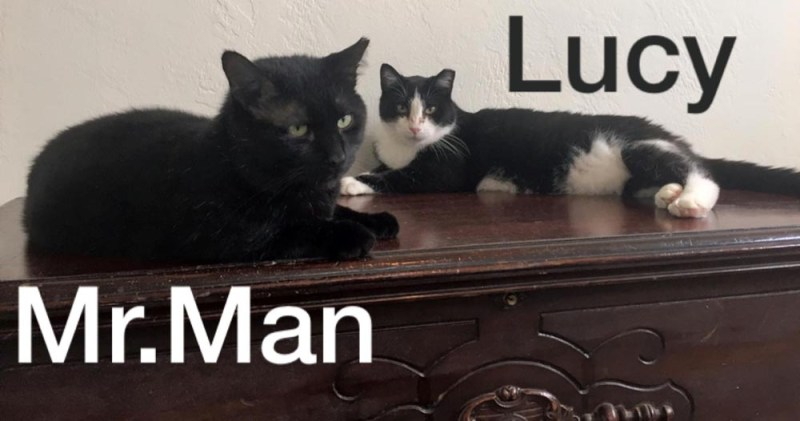 Mr. Man and Lucy