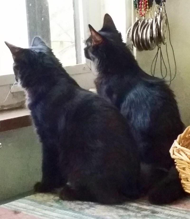 Birdwatching together.