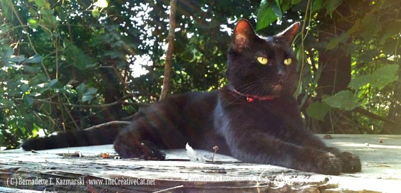 Yard Panther.