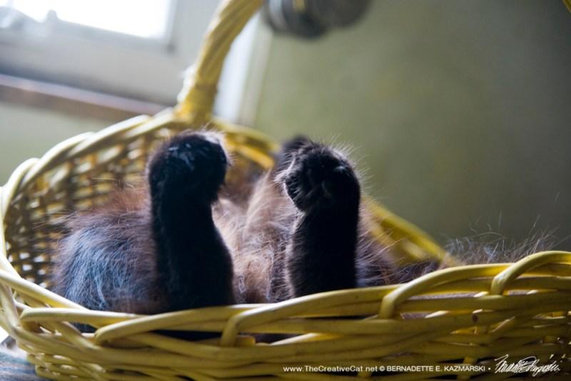 Hamlet's toes.