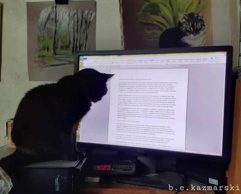 black cat at computer