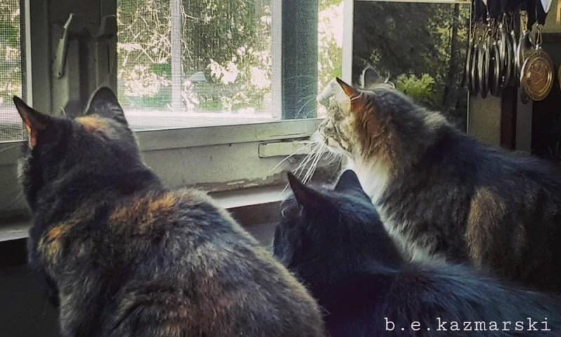 three cats watching birds