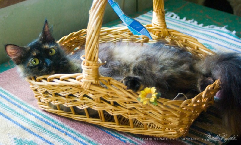 Looking pretty while being silly in the basket.