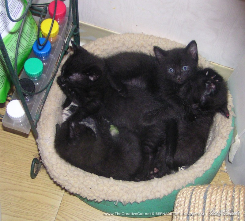 The Curious Quartet in their bed with their signature colors.