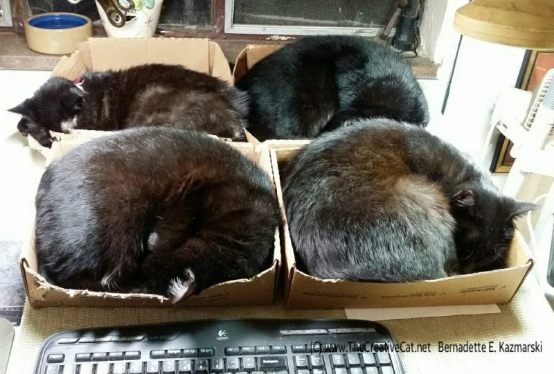 Four neatly organized cats.