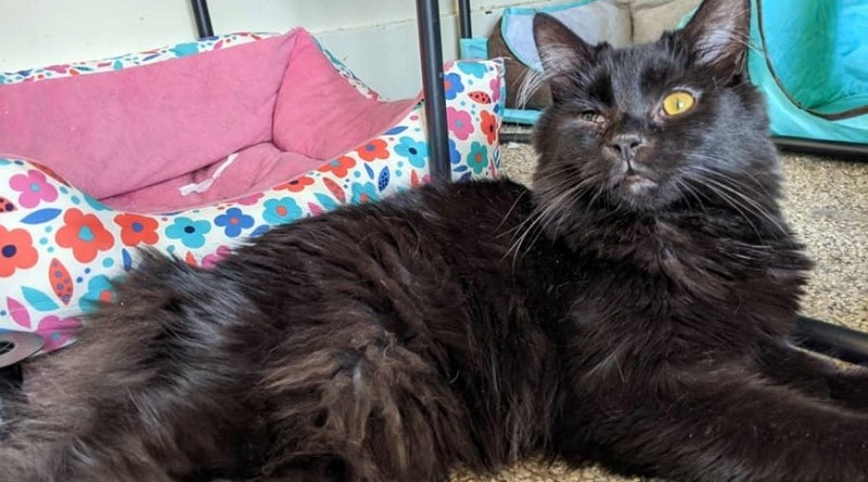 Cats for Adoption: Special Boy, Baby Bear