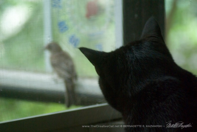Giuseppe watches the bird.