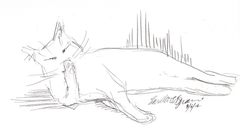 pencil sketch of cat washing