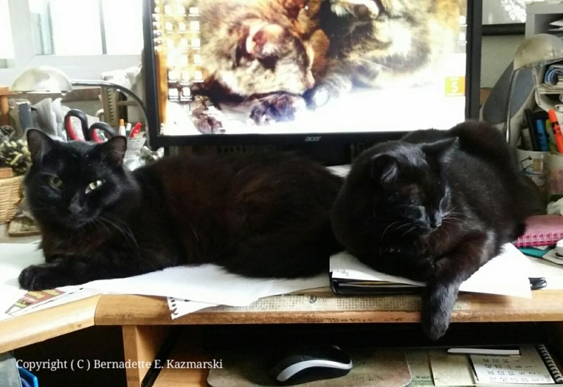 Basil and Bella, mydesk monitors.