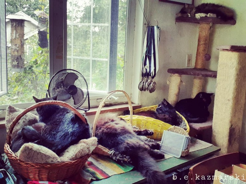 six cats in baskets