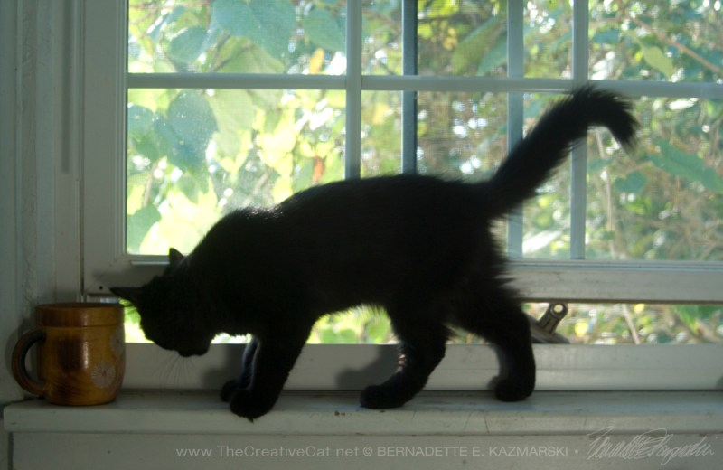black kitten on windowsill