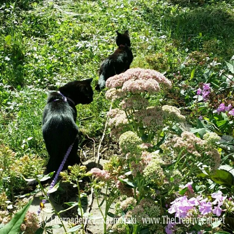Exploring the back yard.