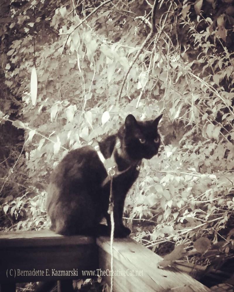 Mimi on the deck rail.