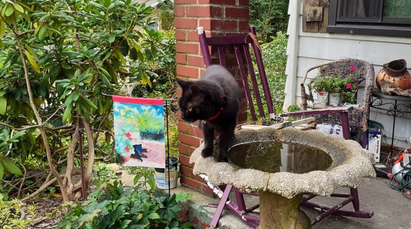 black cat on birdbath