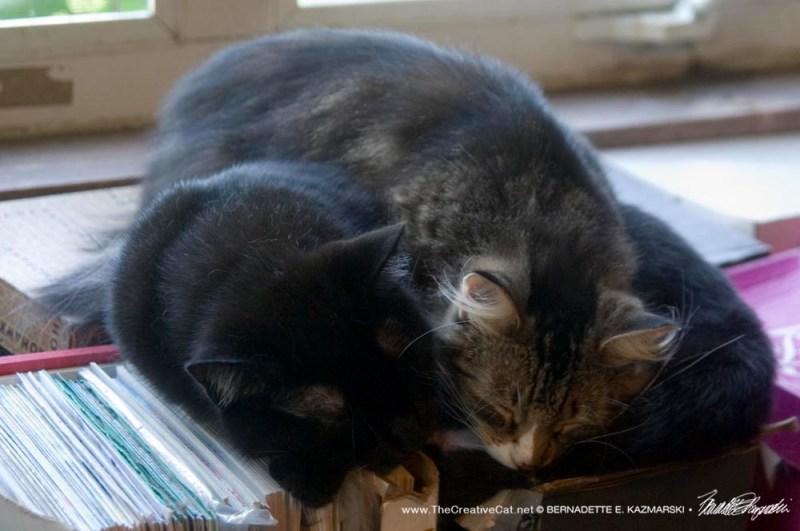 Mariposa enjoys a nap on her fur brother.