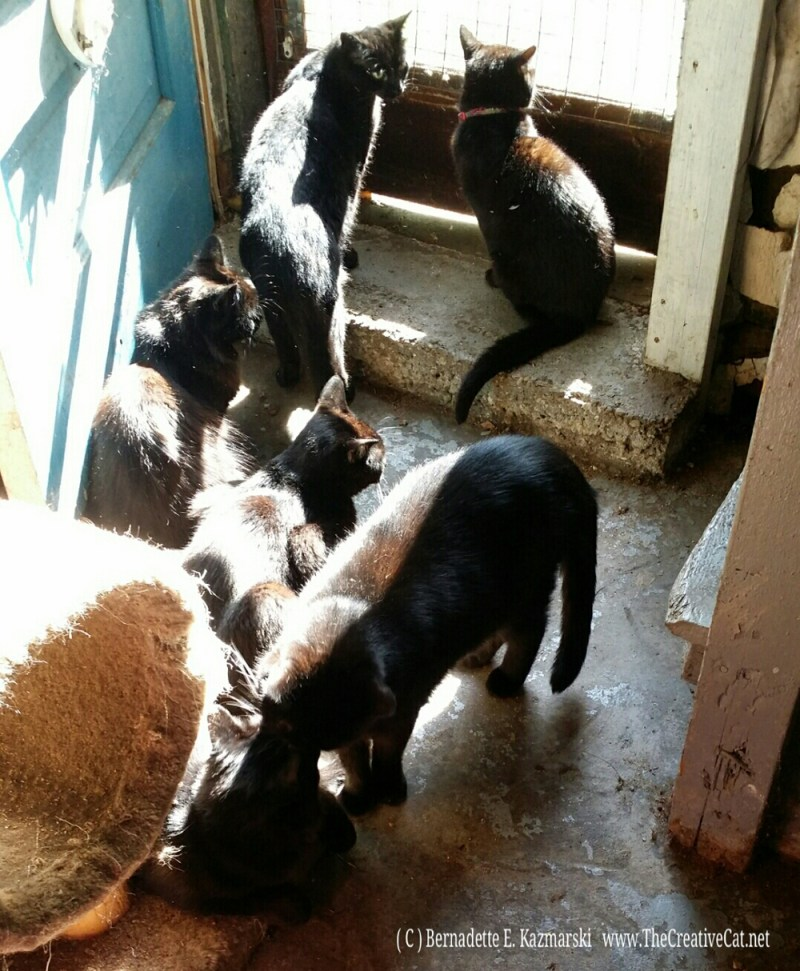 Six black cats enjoying the morning.