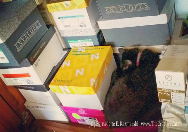 Mimi naps among the boxes of cards.
