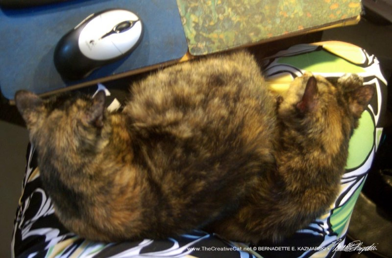 Two torties on my lap.