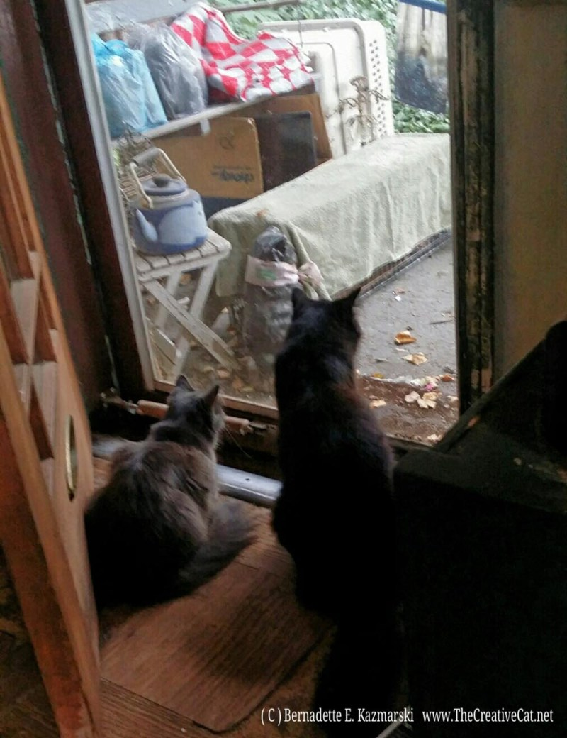 Ophelia and Basil keep watch over the kitty in the trap on the front porch.