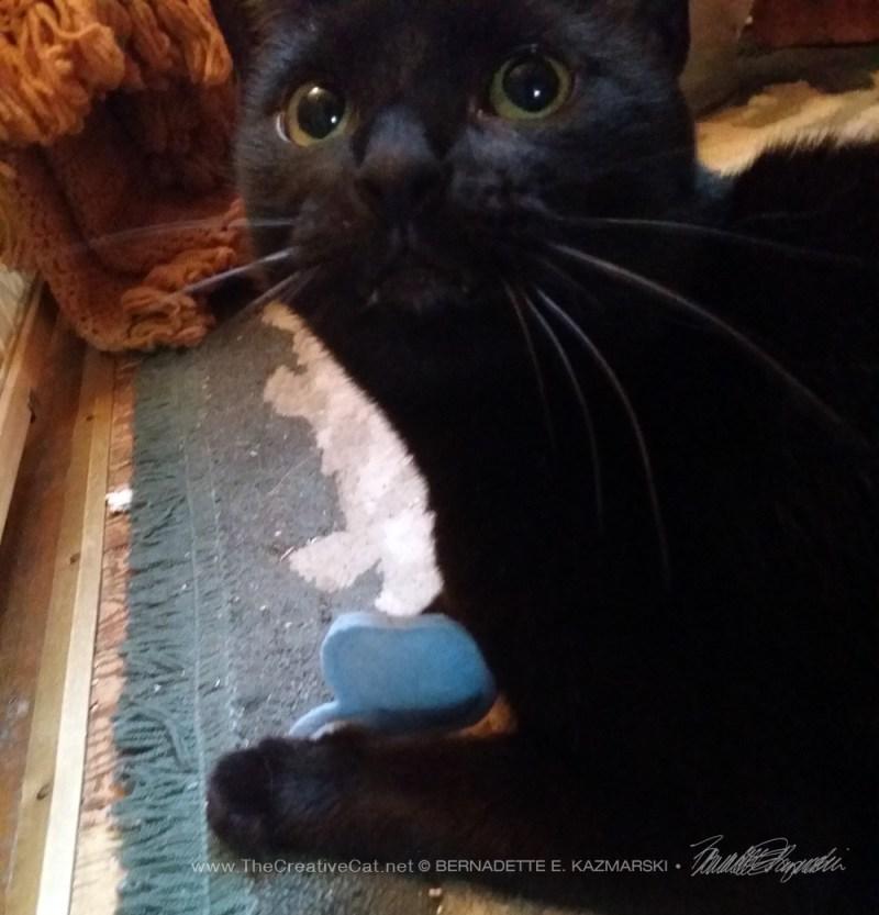 091514-Smokie-Giuseppe-kitten