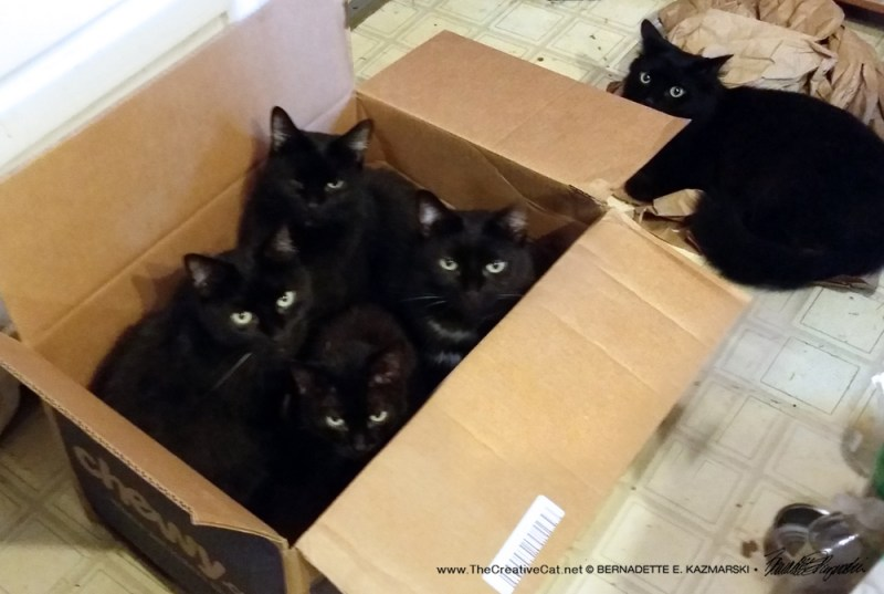 My shipment of housepanthers has arrived.