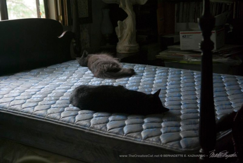 Giuseppe and Ophelia napping on the mattress after I stripped the bed. This is a choice spot.