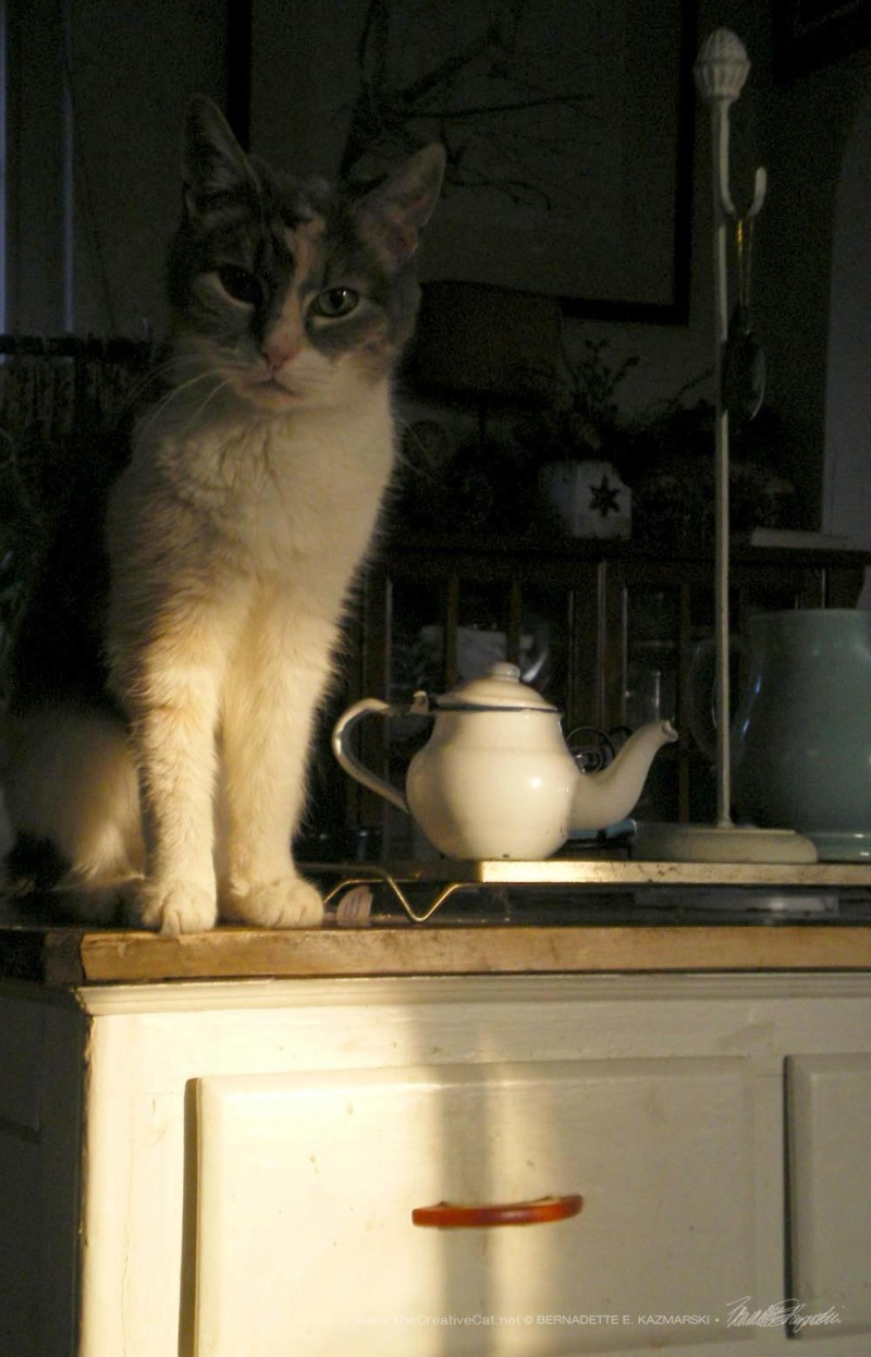 Morning Tea With Peaches.`