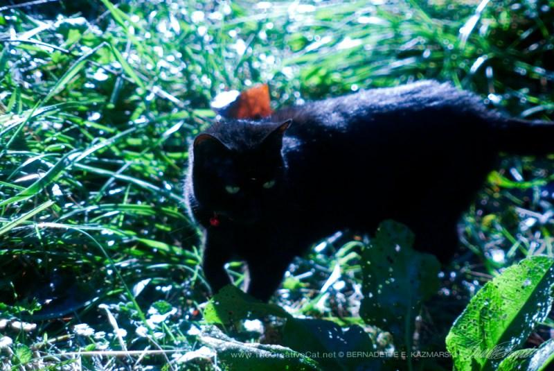 Mimi in the grass.