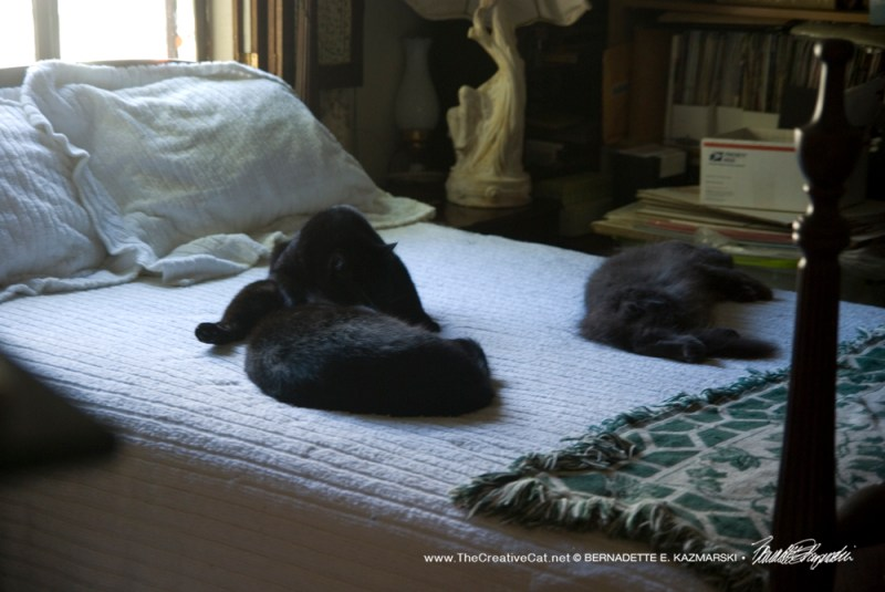 092016-cats-on-bed