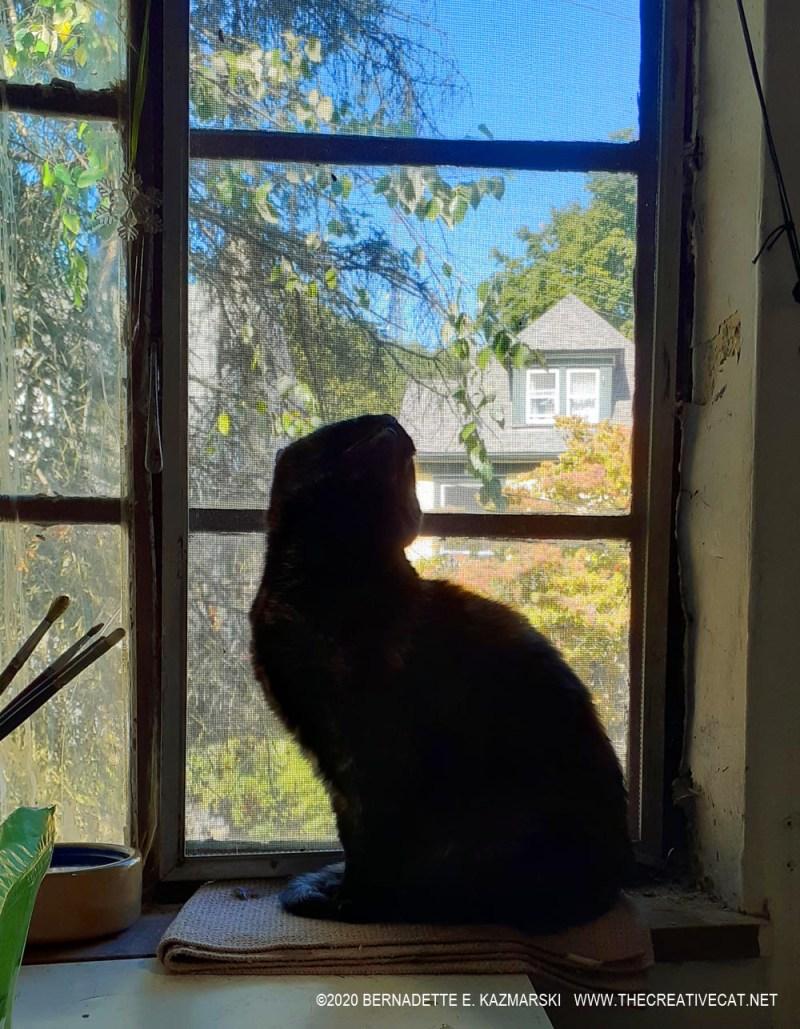 Sienna watching birds on the gutter