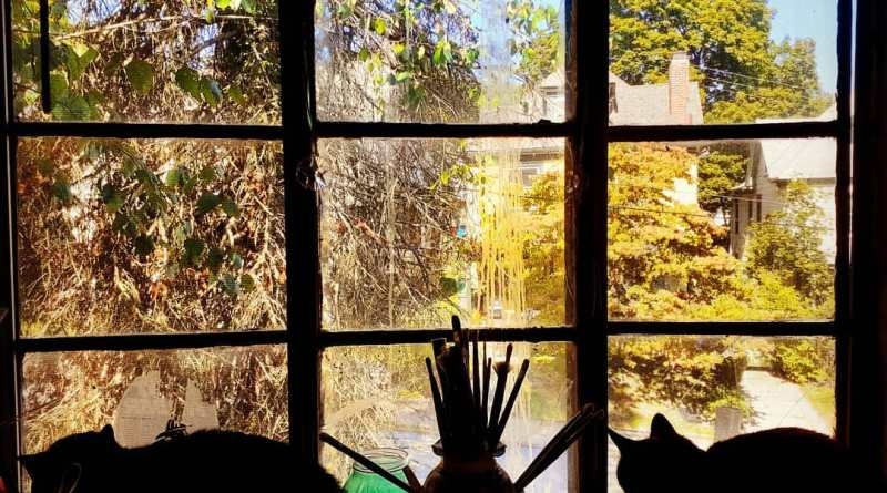 cat silhouettes on the windowsill