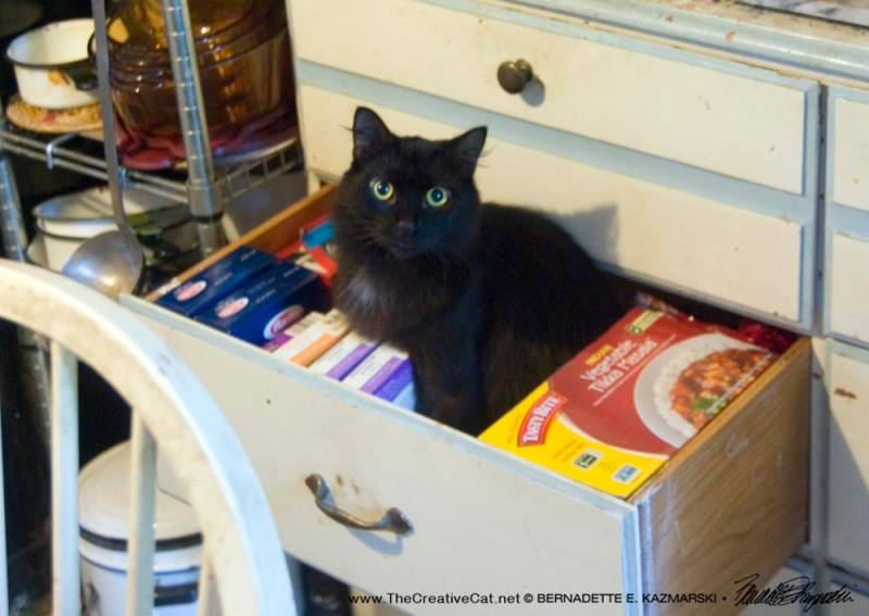 Basil tries out the drawer.