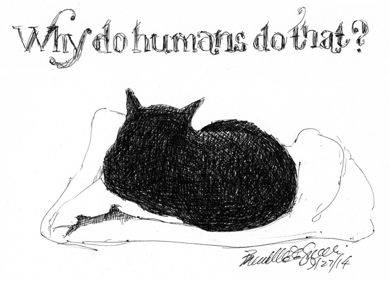 ink sketch of cat sleeping