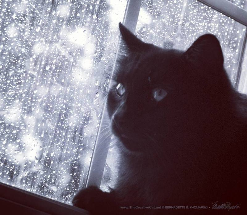Hamlet intently watches the birds, the original black and white.