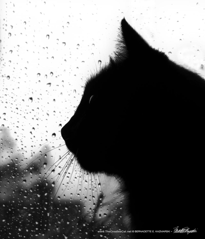 Hamlet's rainy profile.