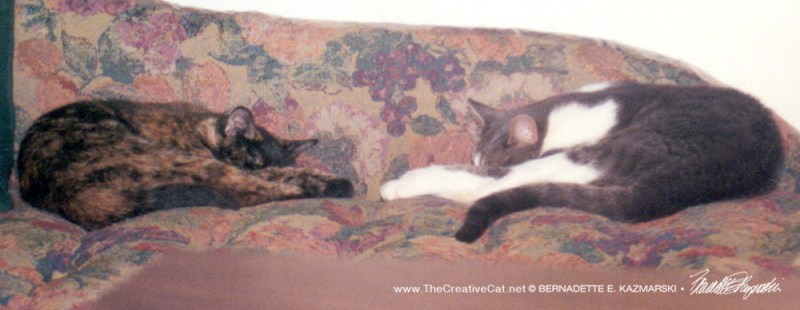 Kelly and Namir sleeping back to back on the couch, position 2.