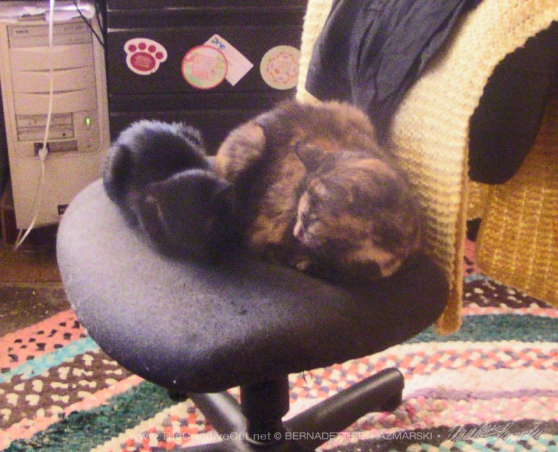 black kitten and tortie cat