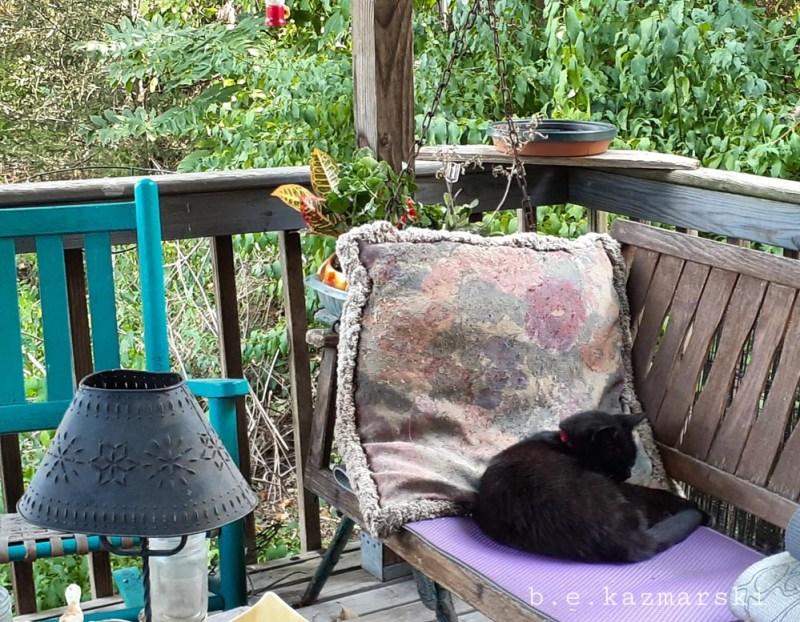black cat on swing