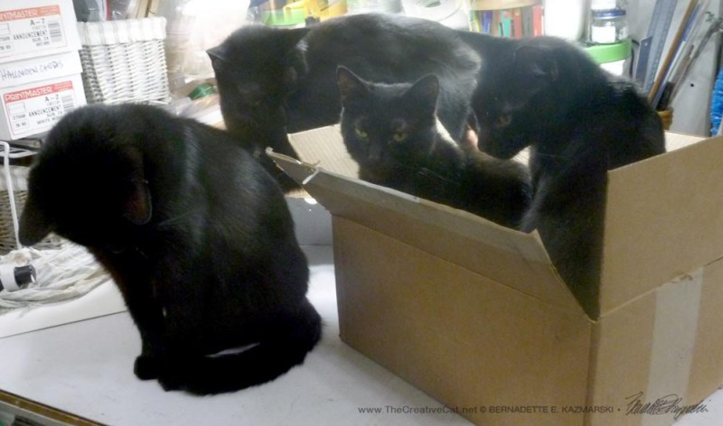 Giuseppe, Jelly Bean, Mimi and Mr. Sunshine