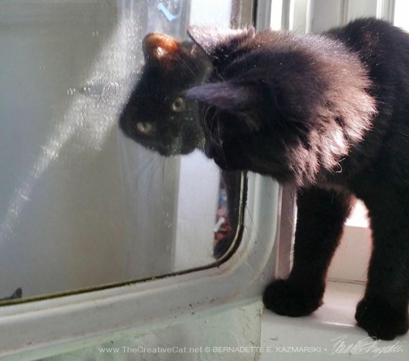 black kitten in mirror