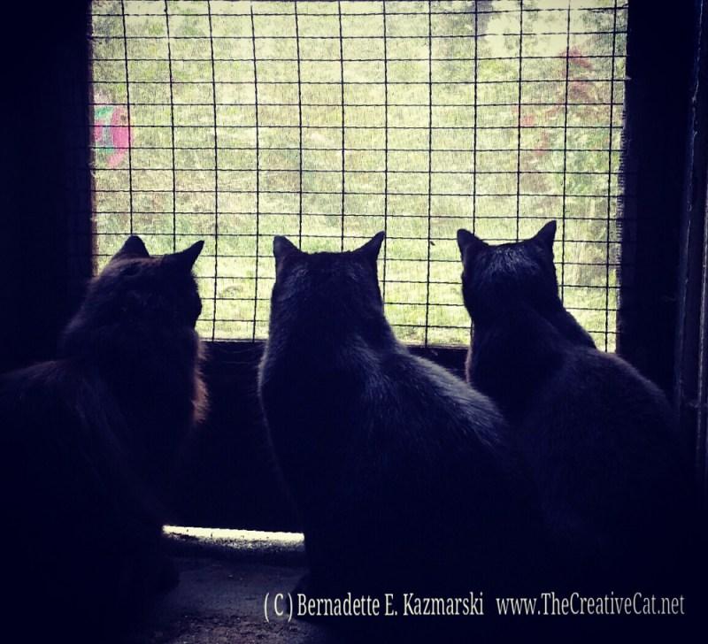 Watching Reality Wildlife CatTV.