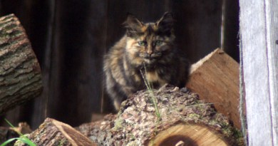 Chloe appeared as if by magic, perfectly camouflaged by her surroundings.