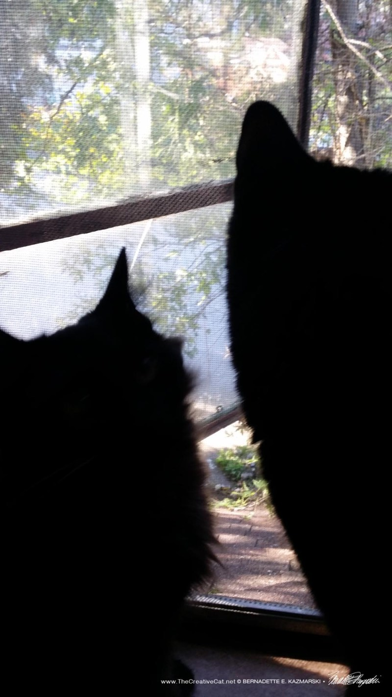 Alvina and Mewsette watch out the window. Mewsette sought her out to impart sisterly wisdom.
