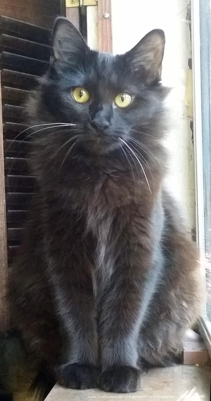 Alvina has gone to her forever home!