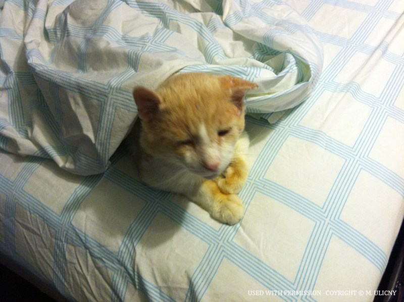 Tommy helps to make the bed.