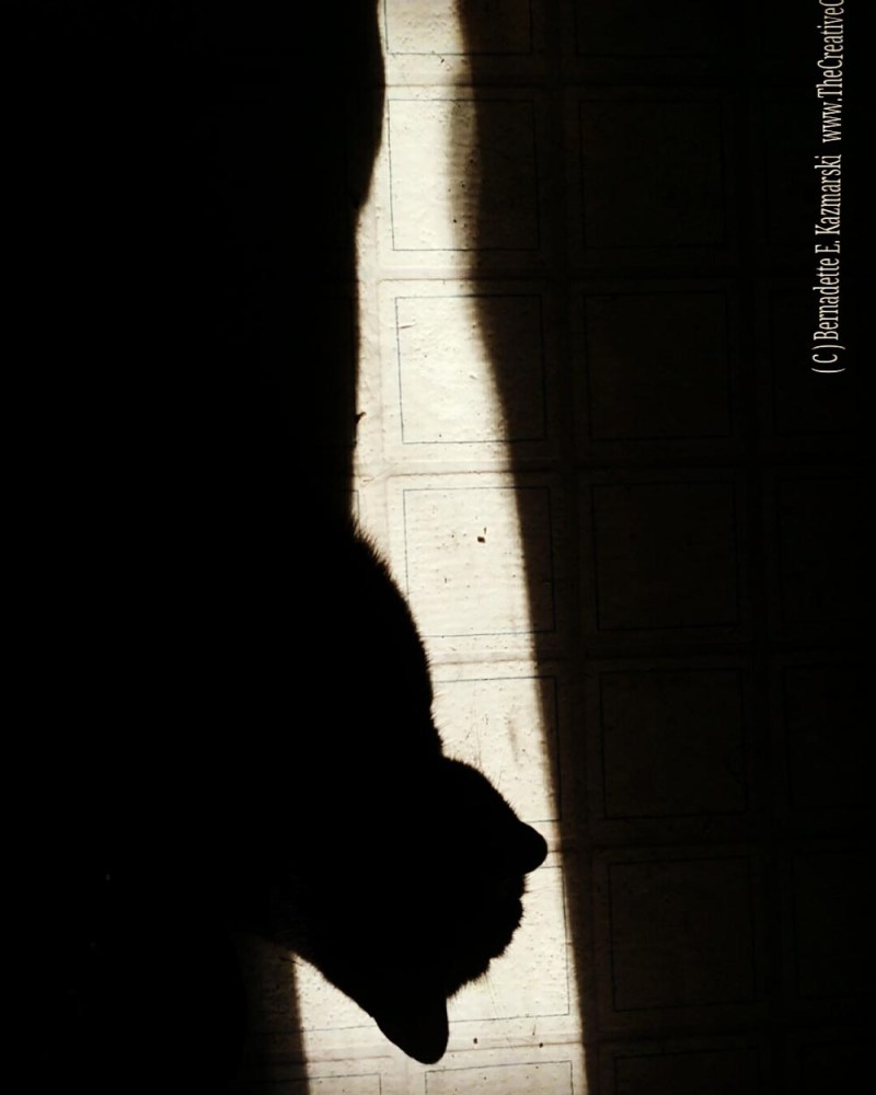 Mewsette in a strip of sun.