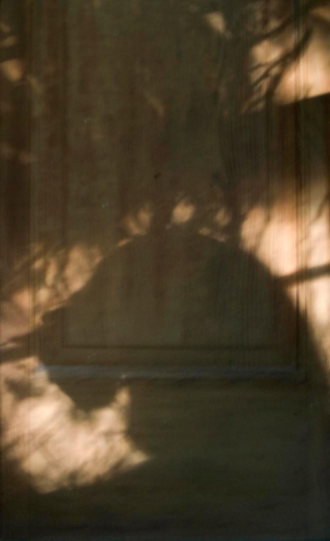 cat shadow on door