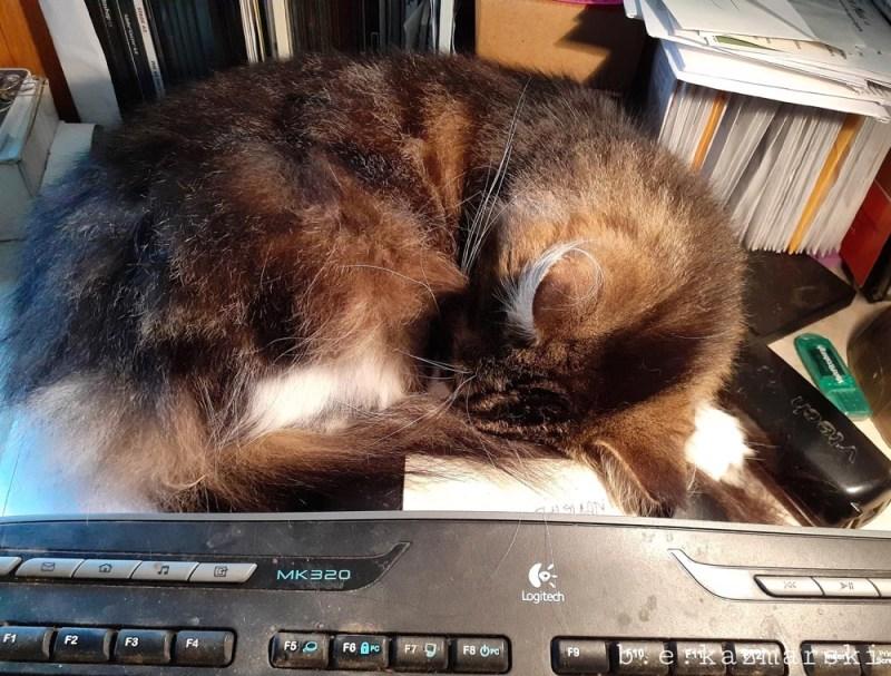 tabby cat sleeping on desk