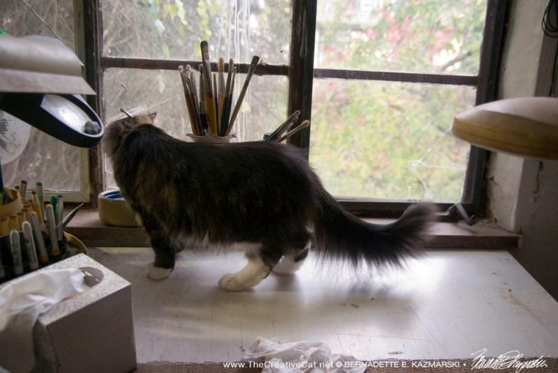 Cat looking out studio window.