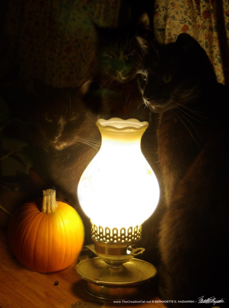 three black cats with pumpkin and lamp